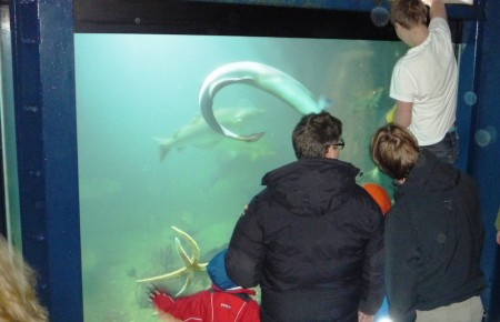 Mating av fisk i Risør Akvarium